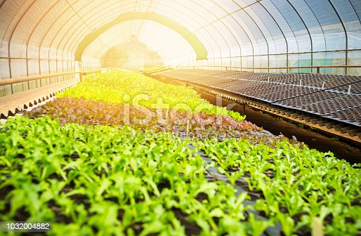 Organic hydroponic vegetable garden greenhouse  in north thailand
