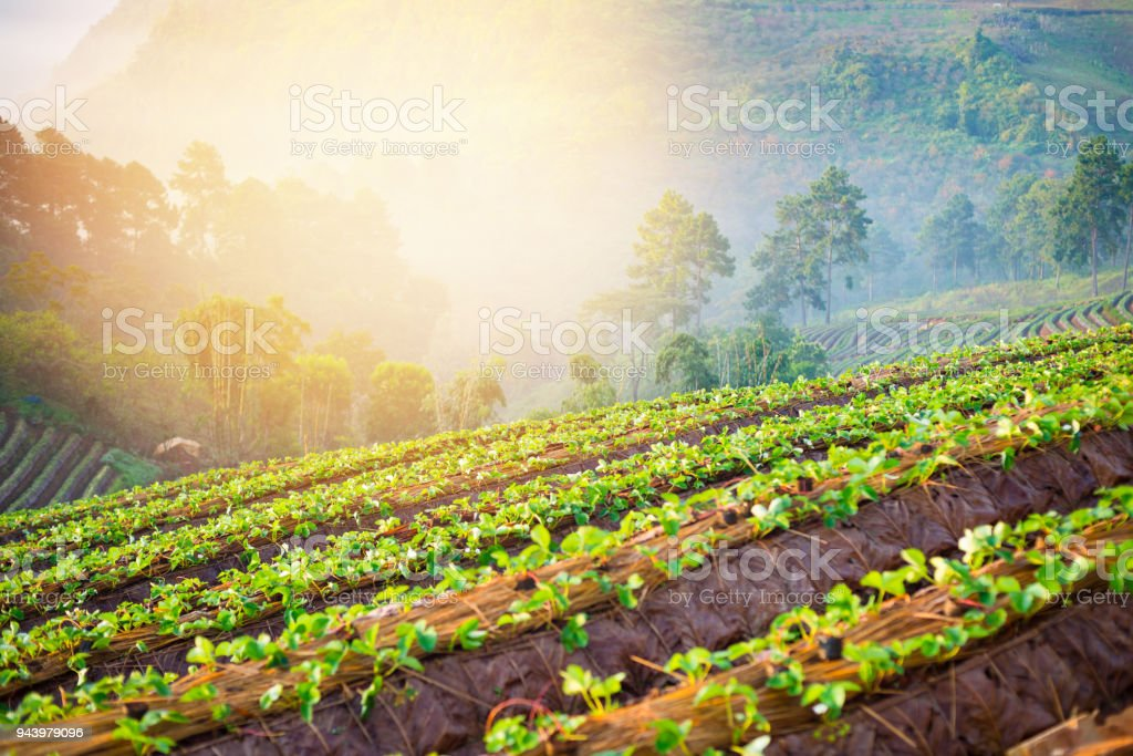 Organic hydroponic vegetable garden greenhouse  in north thailand stock photo