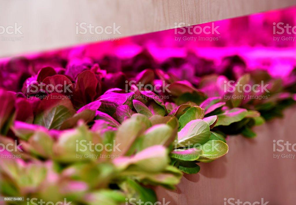 Organic indoor farming stock photo