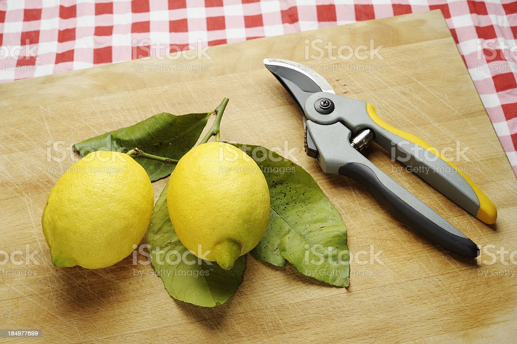 Organic Lemons with Pruning Shears royalty-free stock photo