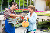 Beautiful senior woman picking out local summer produce. Handsome young local organic  helping her out with tomatoes. He is wearing a bright blue apron. She is wearing a light blue shirt. She has a small shopping basket and other vegetables inside of it. There are plants behind them. Outside.