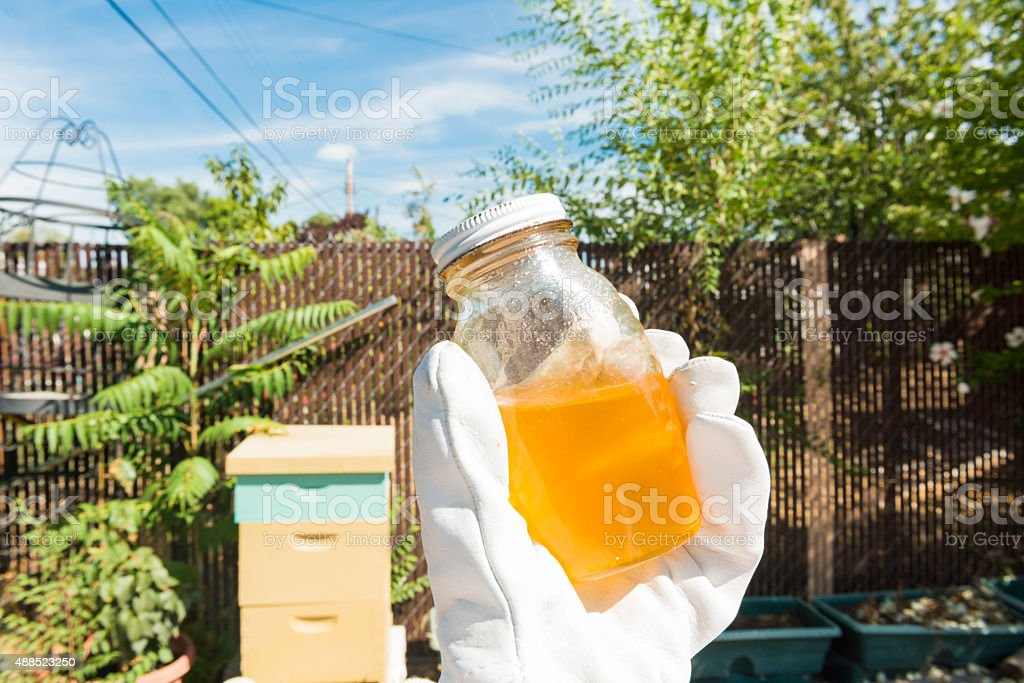 Organic Local Honey Jar from Backyard Beehive Outdoors Agriculture USA stock photo