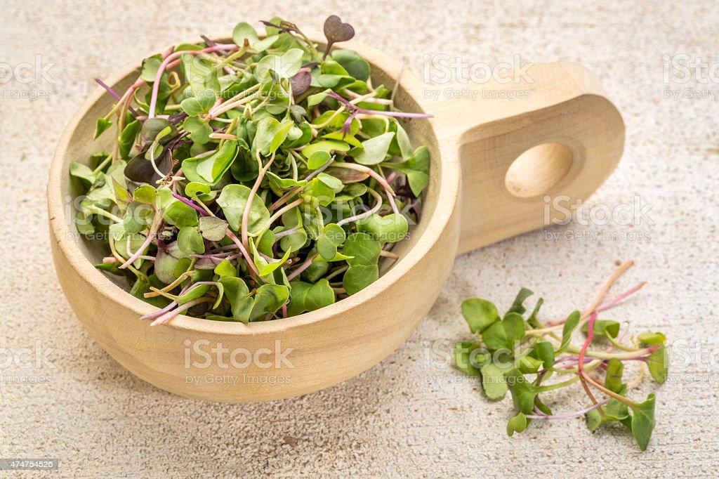 organic micro greens stock photo