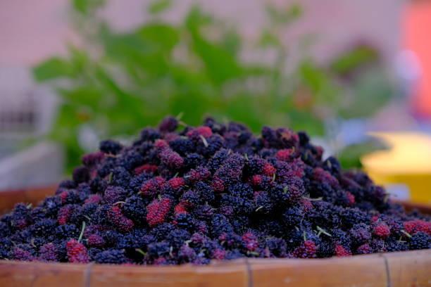 organic mulberries - amoreiras imagens e fotografias de stock