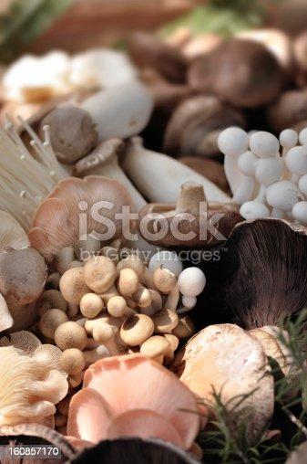 Selection of organic mushrooms.
