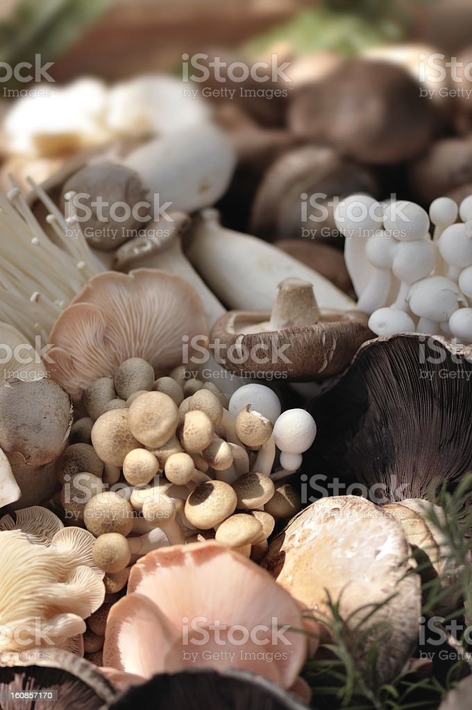 Organic Mushrooms stock photo