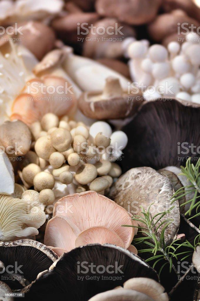 Organic Mushrooms Selection royalty-free stock photo