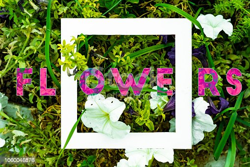655667160 istock photo organic natural leaves and flowers background pattern flat lay with text f 1060046876