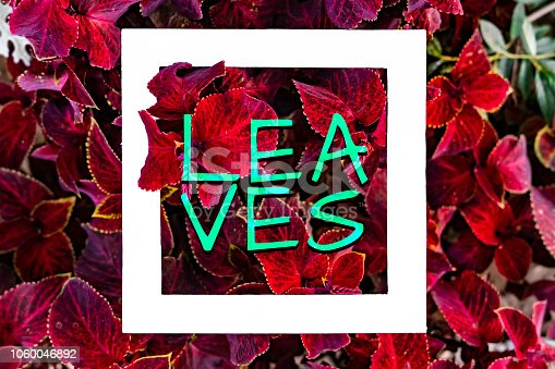655667160 istock photo organic natural leaves and flowers background pattern flat lay with text f 1060046892