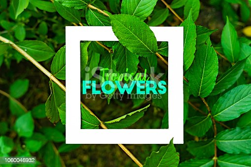 655667160 istock photo organic natural leaves and flowers background pattern flat lay with text tropical flowers f 1060046932