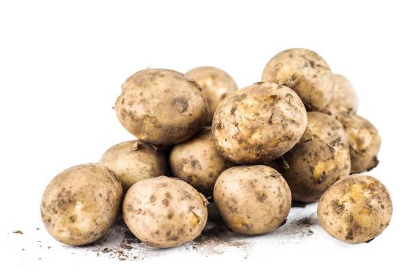 Ekologisk färsk potatis bildbanksfoto