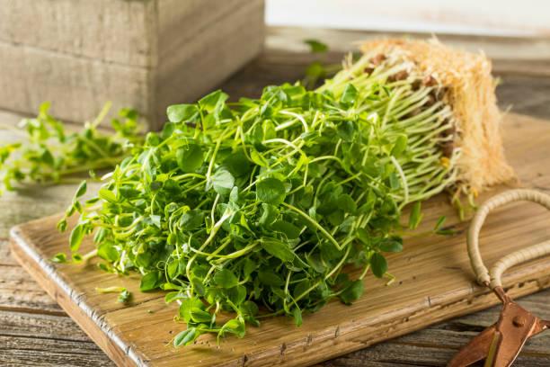 ekologiska raw gröna ärter skott - pea sprouts bildbanksfoton och bilder