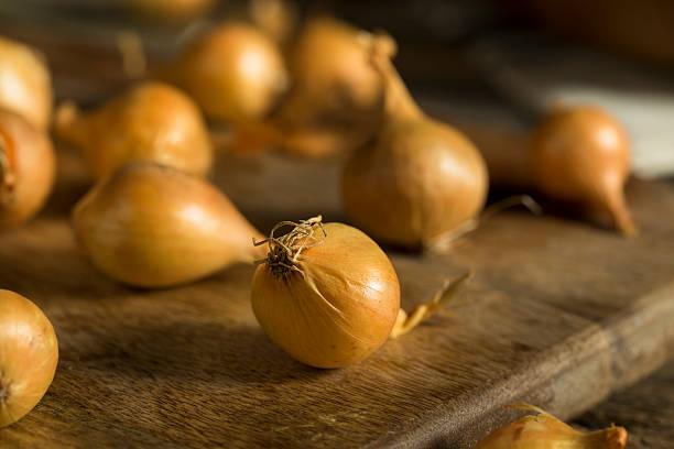 organic raw yellow pearl onions - perlzwiebeln stock-fotos und bilder