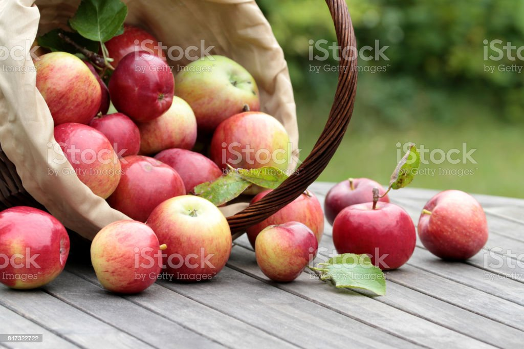 Organic red apples in a basket on the old table stock photo