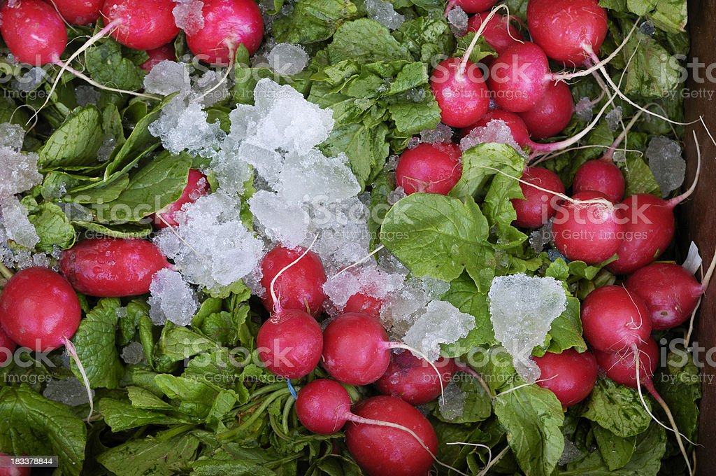 Organic Red Radishes Ready for Shipping royalty-free stock photo