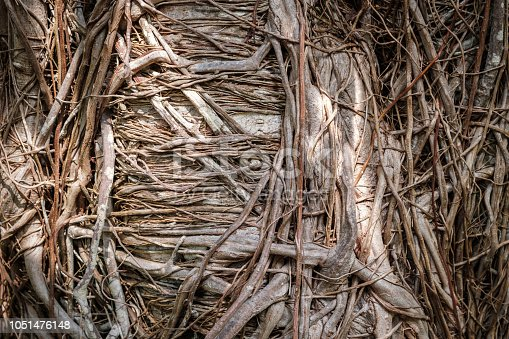 istock organic root pattern - tree roots  nature background 1051476148