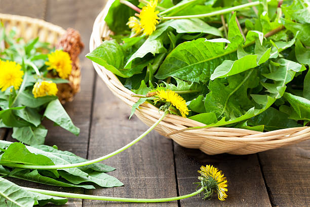organic salad organic salad for healthy life foraging stock pictures, royalty-free photos & images