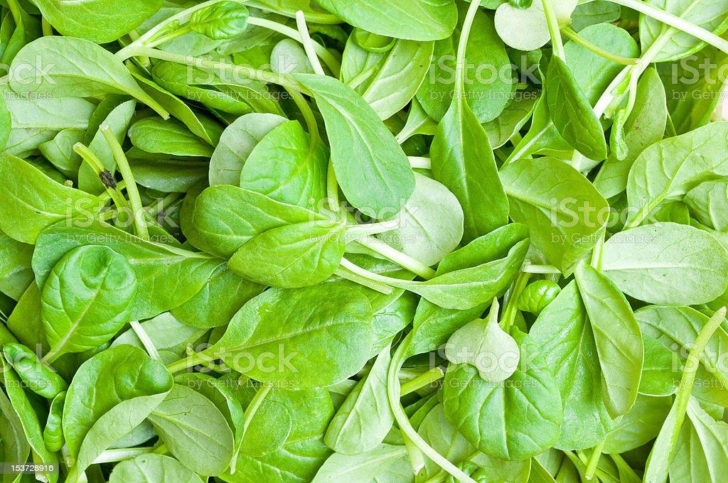 Organic Spring Mix Lettuce royalty-free stock photo
