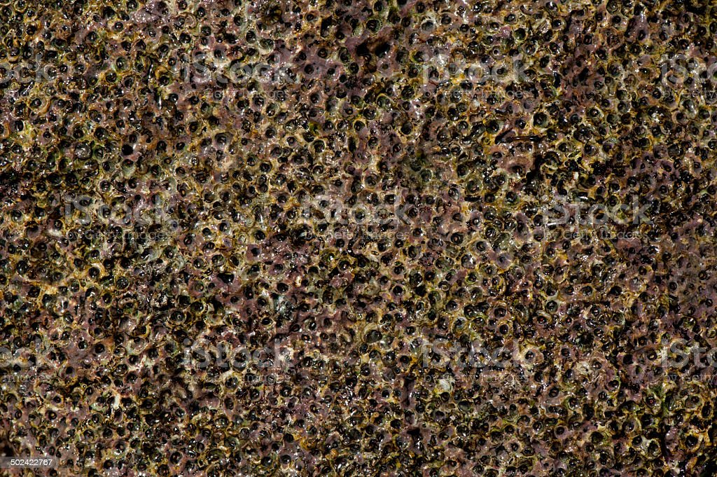 Orgánicos Stone - foto de stock