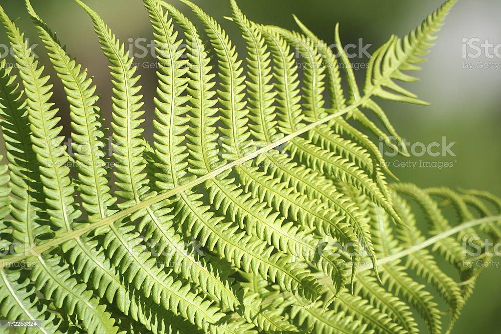 Organic texture royalty free stockfoto