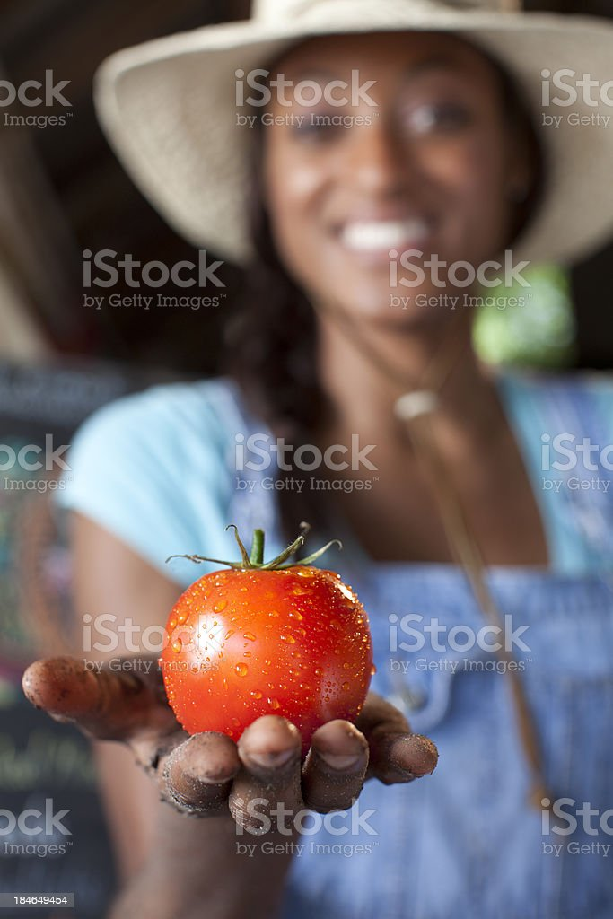 Organic Tomato royalty-free stock photo