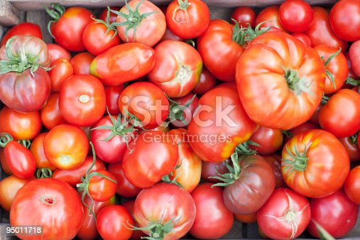 Proud girl holding ripe, red tomatoes in the garden