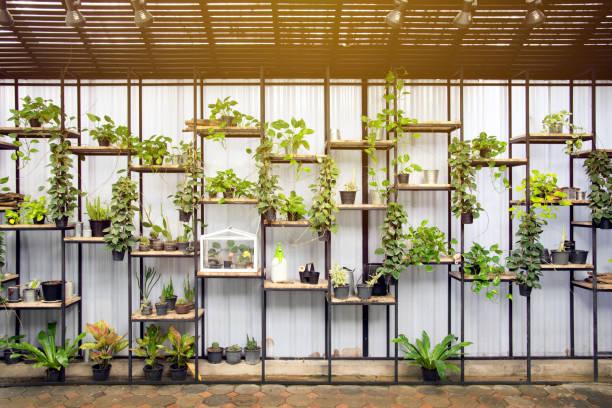 bio-gemüse und pflanzen in den töpfen - urbaner garten stock-fotos und bilder