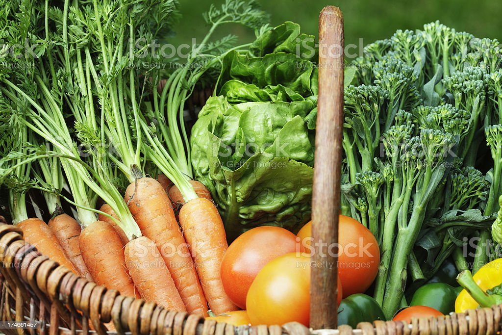 Organic Vegetable Harvest stock photo