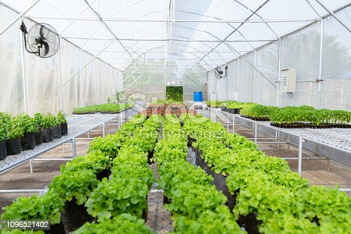 istock organic vegetable to plant on the farm to nursery environmental 1096521402