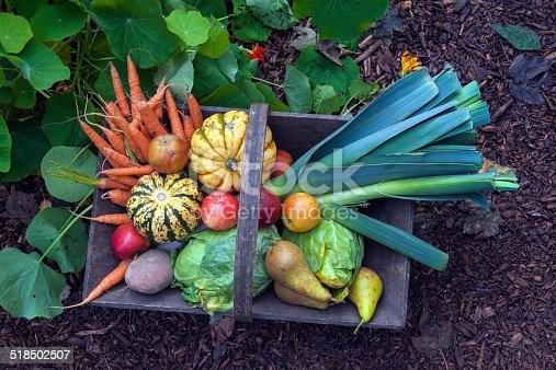 istock Organic Vegetables and Fruit in Wooden Basket, Urban Garden, London 518502507