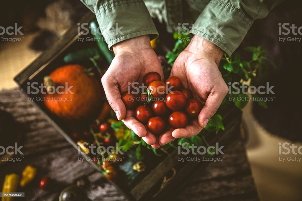 Organic vegetables on wood stock photo