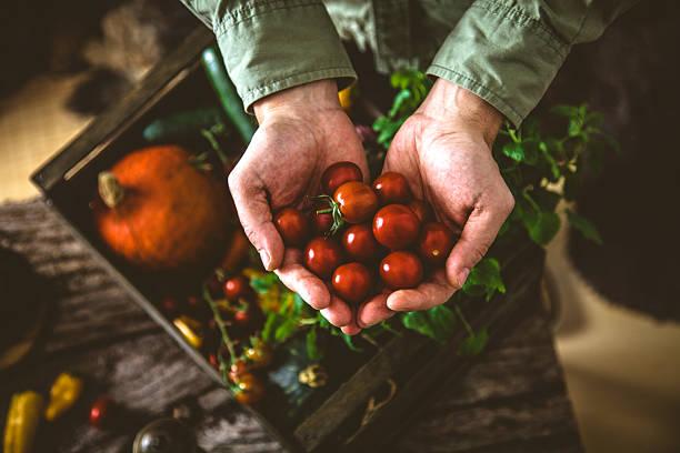 orgânica sobre a madeira produtos hortícolas - picking fruit imagens e fotografias de stock