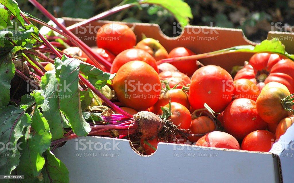 Organic veggies. stock photo
