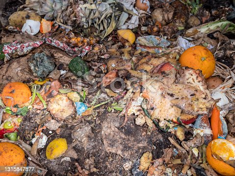 Organic waste in the garden on the compost
