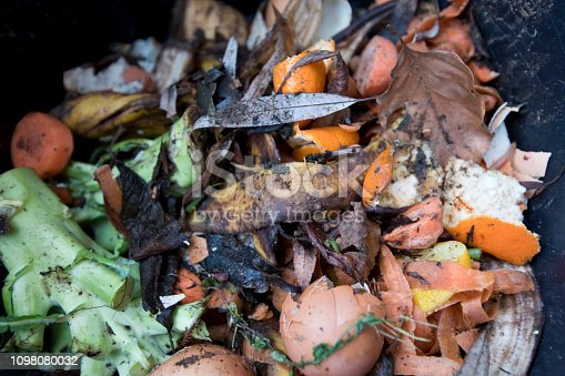 Kitchen food waste in the process of composting