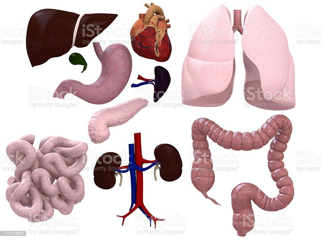 Los órganos gráfico - foto de stock