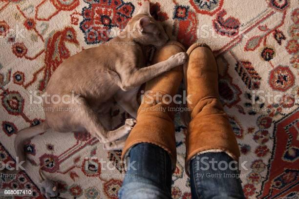 Oriental lilac short hair pure breed cat picture id668067410?b=1&k=6&m=668067410&s=612x612&h=dn1gxrbldivqxq5wb0zmkcydfxzsfi3xdo7wl18vkiq=