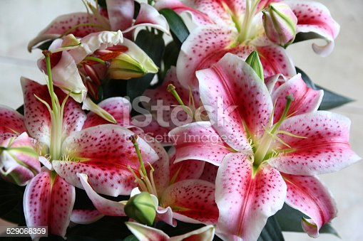Oriental lily flowers in group