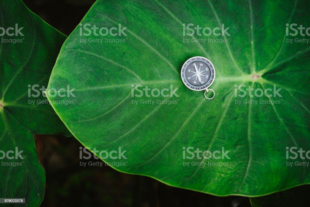 Conceito de orientação - bússola analógica deitado sobre a folha de lótus cor verde intenso enorme - foto de acervo