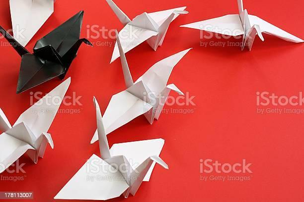 Photo of origami cranes