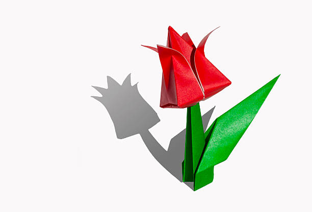 Royalty free origami flower tulip pictures images and stock photos origami flower red tulip isolated on white stock photo mightylinksfo