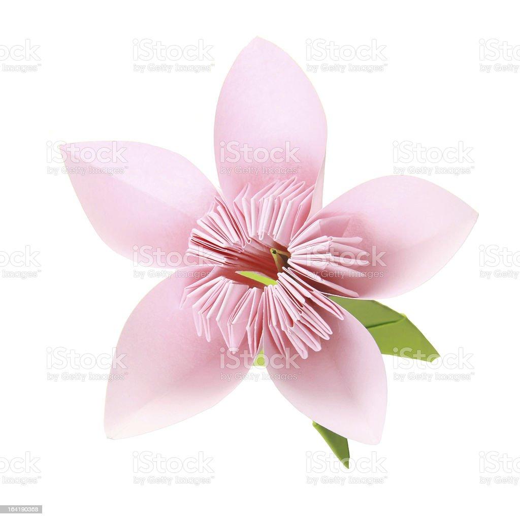 Один цветок сакуры фото