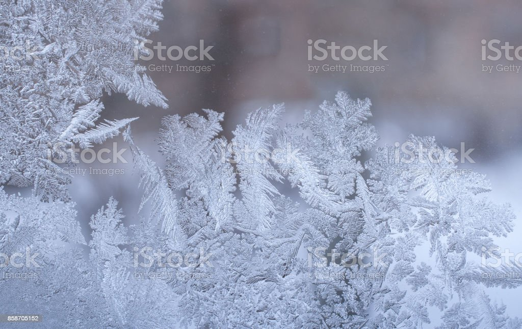 Original frosty pattern in form of leaves of whimsical plants on winter window glass. stock photo