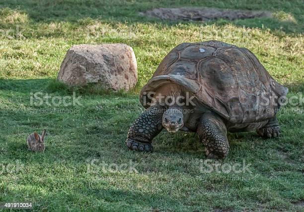 Original tortoise and hare picture id491910034?b=1&k=6&m=491910034&s=612x612&h=s0j4hi6ptflv1gdsc1xalu3hfqsgde6h uetdrb942o=
