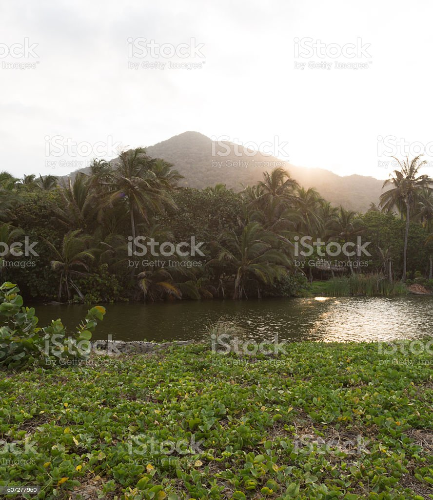 Orinoco Crocodile stock photo