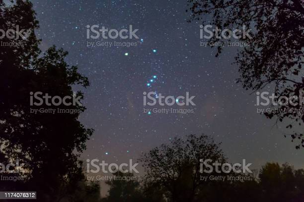 Photo of Orion constellation on the night starry sky between dark tree silhouette, outdoor night forest landscape