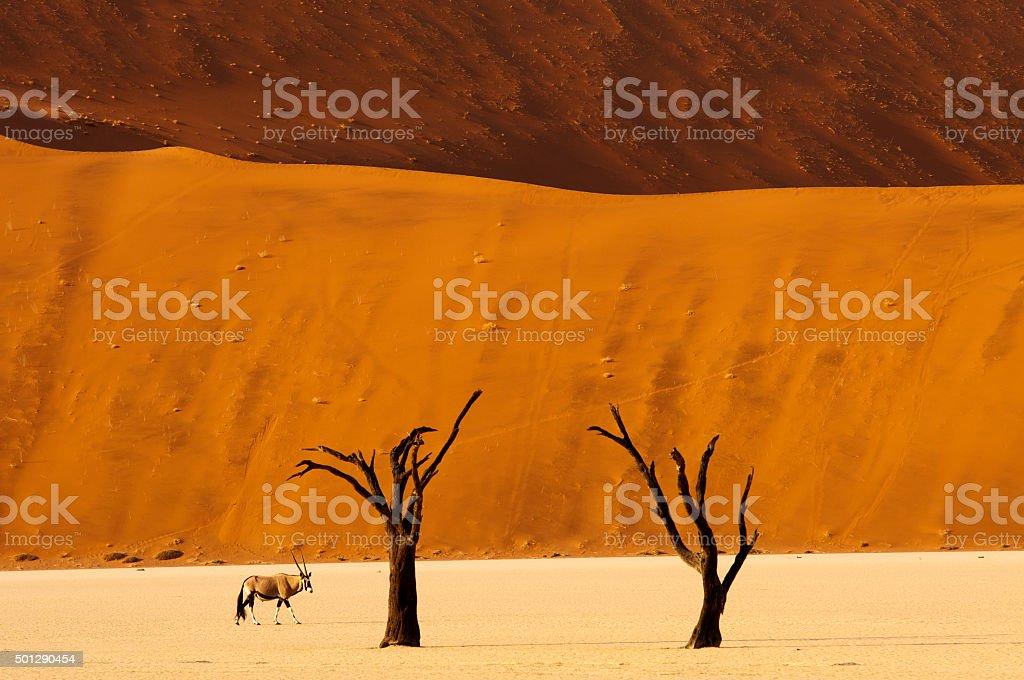 Orix anthelope at Dead Vlei, Namib Naukluft National Park, Namibia stock photo