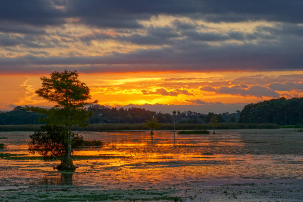 Orlando Wetlands Park During a Vibrant Sunrise in Central Florida USA stock photo