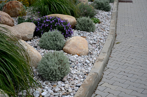 ornamental flower bed with perennial pine and gray granite boulders, mulched bark and pebbles in an urban setting near the parking lot shopping center.
