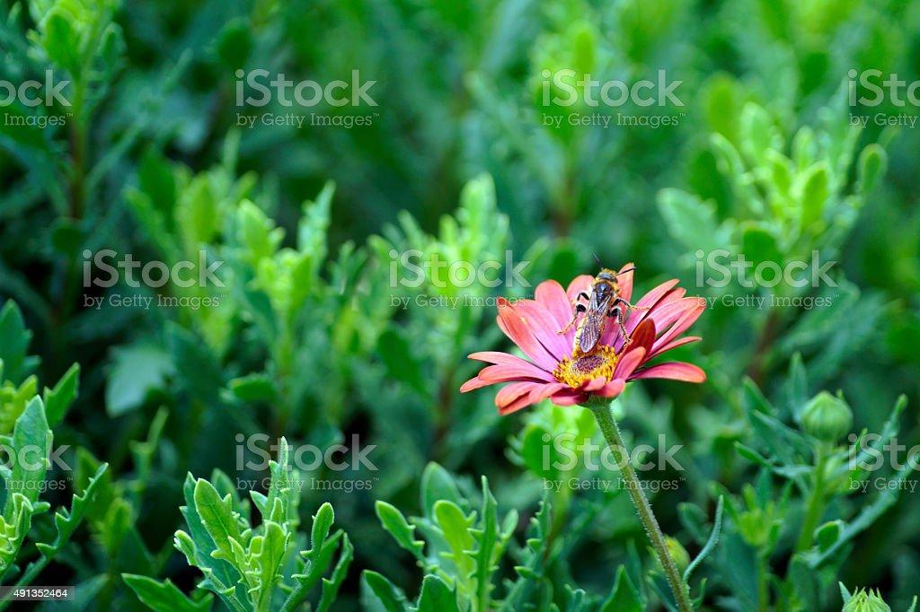 Decorativa flores, sol flores y plantas y - foto de stock